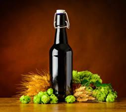 Фотографии Пиво Хмель Цветной фон Бутылка Колос Еда