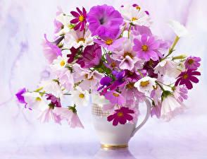 Картинка Букеты Космея Петунья Вазы цветок