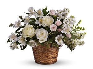 Картинки Букеты Розы Альстрёмерия Белый фон Корзина Белый Цветы