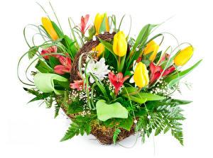 Картинка Букеты Тюльпаны Альстрёмерия Белый фон Цветы