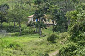 Картинки Бразилия Здания Кусты Пальмы Деревья Fazenda Santa Cruz Природа