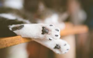 Картинки Коты Вблизи Лапы Животные