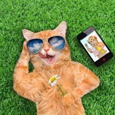 Фотографии Кошки Очки Смартфоны Смешные Животные