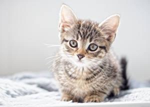 Картинки Коты Котята Смотрит Животные