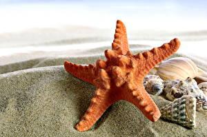 Обои Крупным планом Морские звезды Ракушки Песок