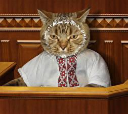 Фотография Креатив Кошки Рубашка Забавные Животные