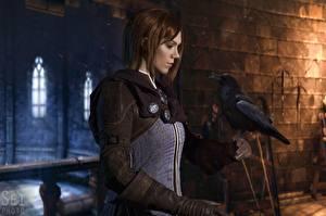 Картинки Вороны Dragon Age Косплей Шатенка Leliana, Natali Naboyschikova Девушки