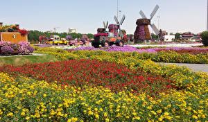 Фото Дубай Сады Бархатцы Петунья Объединённые Арабские Эмираты Дизайн Miracle Garden Природа
