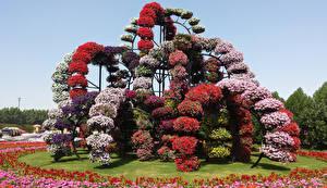 Картинки Дубай Парки Петунья Дизайн Miracle Garden Природа