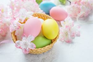 Фото Пасха Праздники Яйца