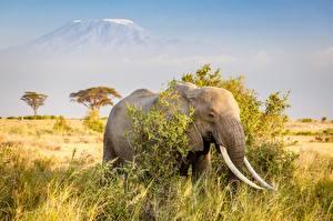 Картинка Слоны Африка Трава