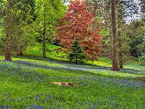 Фотографии Англия Леса Дерево Ель Ardingly Природа