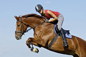 Картинка Конный спорт Лошади Шлема Прыгает спортивный Девушки