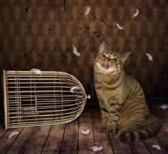 Фотография Перья Коты Доски Язык (анатомия) Животные