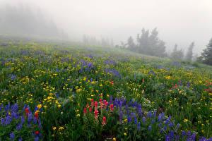 Картинки Луга Люпин Туман Природа