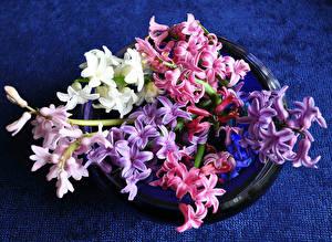 Картинка Гиацинты Вблизи Цветы