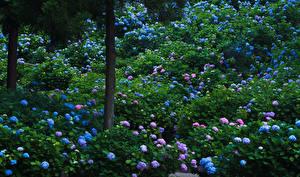 Картинки Япония Киото Сады Гортензия Ствол дерева