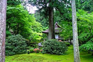 Обои Киото Япония Парки Здания Кусты Ствол дерева Природа