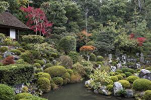 Обои Киото Япония Парки Пруд Камни Деревья Кусты Природа