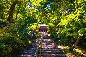 Картинки Киото Япония Парки Лестница Кусты Деревья Sagano Природа