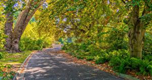 Картинка Мельбурн Парки Осенние Дороги Деревья Листва Природа