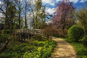 Фотографии Нидерланды Весна Мосты Кусты Wijdemeren