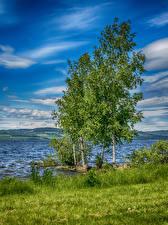 Фотографии Норвегия Озеро Лето Небо Деревья Трава Hedmark
