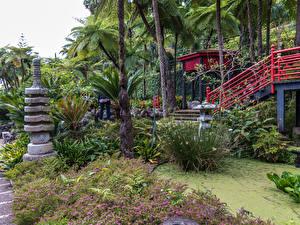 Картинка Португалия Сады Тропики Кусты Пальмы Monte Palace Tropical Garden Funchal Madeira Природа