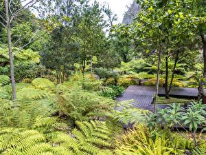 Обои Португалия Парки Деревья Кусты Madeira Sao Vicente Природа