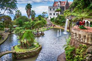 Обои Португалия Курорты Пруд Водопады Дома Пальмы Funchal Madeira Island