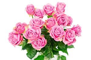 Картинки Розы Букеты Розовый Белый фон Цветы
