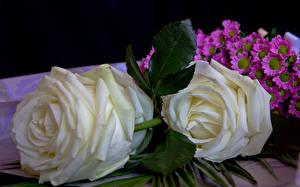 Фотография Розы Белый Цветы