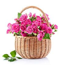Картинка Розы Белым фоном Корзинка Розовый Листья Цветы