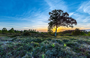 Картинки Пейзаж Рассветы и закаты Небо Деревья Трава Highwood Природа