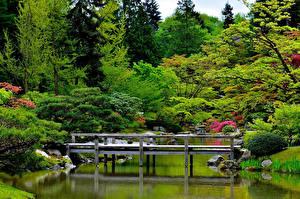 Картинка Сиэтл Сады Пруд Мосты США Кусты Деревьев Japanese Garden Природа