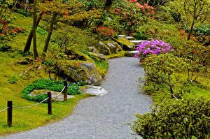 Фотографии Сиэтл Штаты Сады Кусты Japanese Garden Природа