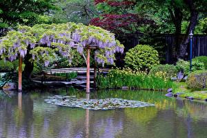Обои Сиэтл Америка Сады Глициния Пруд Кусты Уличные фонари Japanese Garden Природа