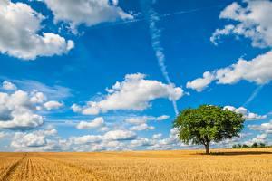 Картинки Небо Поля Облака Деревья