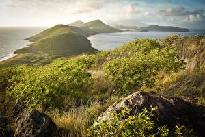 Картинка Тропики Берег Холмы Кусты Saint Kitts and Nevis Caribbean Природа