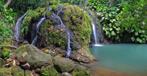 Фотография Тропики Водопады Камни Утес Мох Ветвь Cadet Guadeloupe Природа