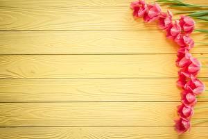 Картинки Тюльпаны Доски Шаблон поздравительной открытки Цветы