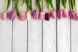 Фотографии Тюльпаны Доски Шаблон поздравительной открытки
