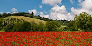 Фотографии Тоскана Италия Маки Поля Холмы Природа