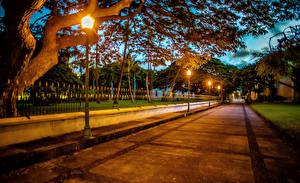 Фото Штаты Вечер Гавайи Уличные фонари Ограда Деревья Honolulu Природа
