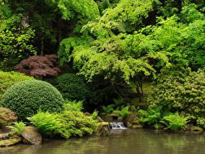 Обои США Сады Кусты Japanese Garden Portland Природа картинки