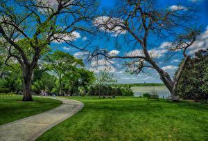 Фотографии Штаты Парк Техас Газоне Дерево Dallas Природа
