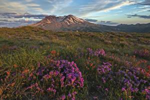 Фотографии США Парк Наперстянка Пейзаж Холм Трава Mount St. Helens National Park Природа