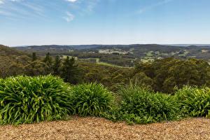 Обои Австралия Леса Кусты Adelaide Природа