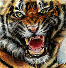 Фотография Большие кошки Тигры Клыки Рисованные Злость Взгляд Усы Вибриссы Морда Животные