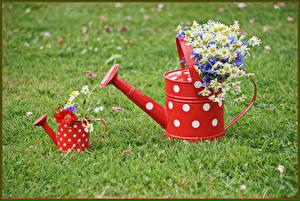 Картинки Букеты Ромашки Маки Трава Цветы